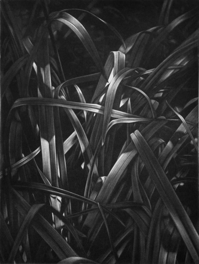 Guy Braun, « Herbes ».